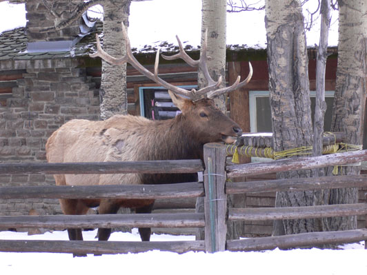 Banff Wildlife Gallery